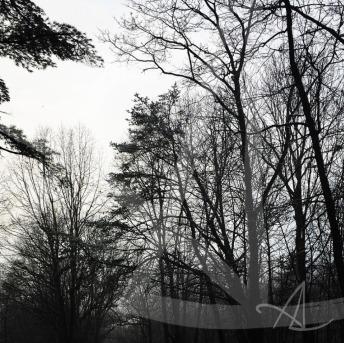 winter_trees